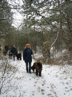 2012-02-12-TNS-snertwandeling-Oostvoorne---Rockanje--13-