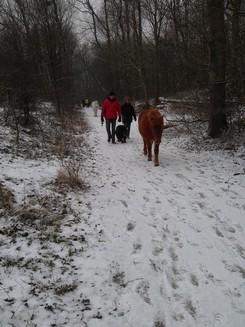 2012-02-12-TNS-snertwandeling-Oostvoorne---Rockanje--23-