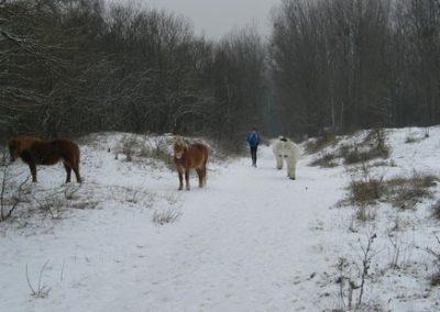 2012-02-12-TNS-snertwandeling-Oostvoorne---Rockanje--26-