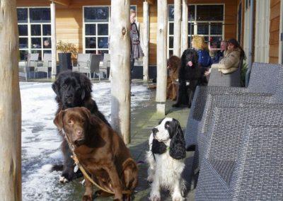 2013-02-10-snerten-0ostvoorne--11-