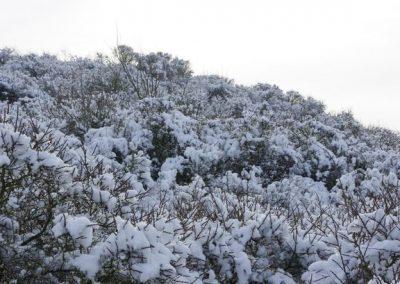 2013-02-10-snerten-0ostvoorne--2-
